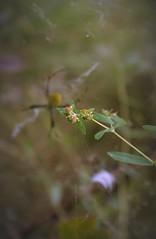 A thing is mighty big ... (rachelhartleysmi) Tags: summer garden spider weeds gardenspider
