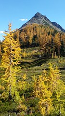 Easy Pass (Go4Hike) Tags: mountains nature landscape hiking trail pacificnorthwest larch northcascades easypass fallfoilage washingtonhiking octoberhiking hikingwashington washingtontrails fallhiking pacificnorthwesthiking fallinwashington autumnhiking larchhikes northcascadeshiking highway20hiking