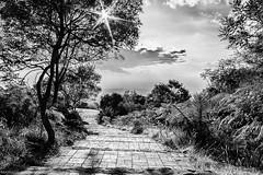 Atardecer (Marypog) Tags: bosque niebla sendero blanconegro