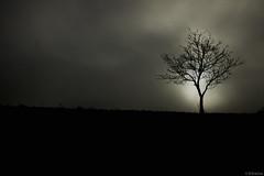 """along the highway"" (B.Graulus) Tags: mist tree nature leuven fog canon photography belgium outdoor belgië belgica 600d photografia"
