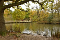 Lunchtime walk (Juanito Moore ( John Moore )) Tags: park bridge trees red people lake green water grass countryside pond outdoor walk serene essex chingford juanitomoore