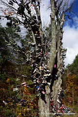 Shoe Tree (Standing Hawk) Tags: shoes shoetree m66 kalkaska southarmstudio leetsville northernmichihgan