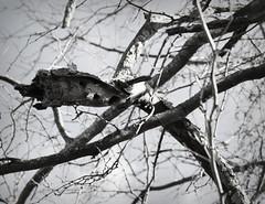 Tree Man (Carol Ball) Tags: tree nature branches tamron70300mm facesinplaces canoneosdigitalrebelxs