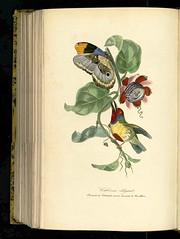 Anglų lietuvių žodynas. Žodis versicoloured reiškia įvairios spalvos lietuviškai.