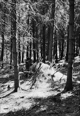 abandoned anthill II (j.gumulec) Tags: light white black film contrast analog darkroom nikon ray shine forrest negative 135 nikonfm2 sunray foma smallformat fomapan fomadon