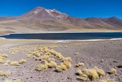 Laguna Minique (Ralph Green) Tags: chile southamerica grass andesmountains bunchgrass pajabrava reservanacionallosflamencos lagunaminique