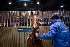 031216 (zuzannalupa) Tags: horse thoroughbred deauville sale auction