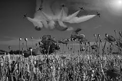 POP0015 (Smart Aviation Art) Tags: poppy poppies poppyfield poppyfields lancaster vulcan avro spitfire hurricane aircraft military bbmf