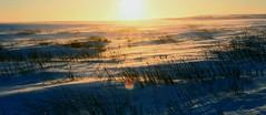 Snowy Prairie, North Dakota (USFWS Mountain Prairie) Tags: usfws prairie prairiepotholeregion prairiepotholes northerngreatplains greatplains prairies sundog usfishandwildlifeservice conservation