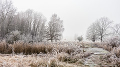 Frozen Landscape (dersgtdan) Tags: frozen landscape landschaft gefroren eis bäume bach einsam alleine kontrast pentax k3 18135