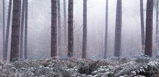 Winter Chill in the Forest