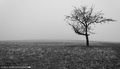 A cold morning in early December 2. (andreasheinrich) Tags: landscape tree fields fog morning winter december blackandwhite blackandwhitephotos misty cold germany badenwürttemberg neckarsulm dahenfeld landschaft baum felder nebel morgen dezember schwarzweis neblig kalt nikond7000