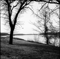 River View (greenschist) Tags: trees usa washington missouri river missouririver water film ebcfujinon80mmf35 blackwhite kodaktrix400 analog silouettes fujifilmgf670