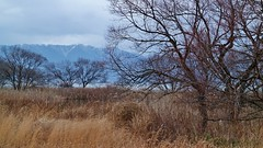 Cloudy Evening / When I think of you.. (maco-nonch★R(on/off)) Tags: lake chilly cold windy winter tree mountains hiramountains lights marsh unescoramsarwetland biwako lakebiwa 琵琶湖 比良山地 manual manualexposure withered grass deadgrass snowcapped