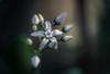 Distinguished (hploeckl) Tags: macro botanical botanicalgarden stgallen switzerland nikon d750 10528 micronikkor