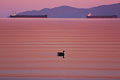 Rhythm of Red Tide (lfeng1014) Tags: rhythmofredtide sunrise englishbay vancouver britishcolumbia canada canon5dmarkiii 70200mmf28lisii ocean ships waves canadagoose bird water lifeng travel
