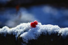 No winter is too cold when you have enough LOVE. (Đøn@tus) Tags: heart redheart red winter snow love outdoor cold