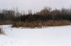 (Armin Schuhmann) Tags: 2015 nikomat nikkormat nikon ft2 nikkor h 85mm f18 telephoto prime biotar manual old vintage l1a skylight kodak colorplus 200asa color negative tetenal c41 scan selfdeveloped shootfilm argentique analogue analogic analog analogo winter snow filmphotography filmisnotdead filmscan filmphoto film filme ishootfilm believeinfilm buyfilmnotmegapixels outdoors nature natural landscape forest woods field grass grassland montreal quebec canada 35mm cold