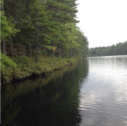 Weary Pond - www.amazingfishametric.com