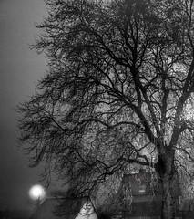 La brume et l'arbre (krystinemoessner) Tags: monochrome paysage amiens sw bw bn arbre brume krystine moessner taek internationalflickrawards