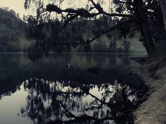 Gloomy lake (elly.sugab) Tags: lake reflection nature water monochrome tree gloomy pale ranukumbolo semeru