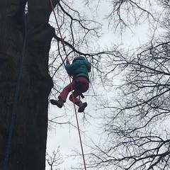 Video - Girl climbs tree (Montgomery Parks, MNCPPC) Tags: treeclimbing woodsidepark january2017 2017