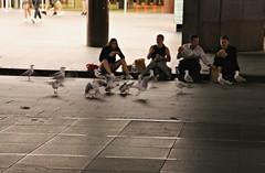 2017 Midnight Snacks (dominotic) Tags: 2017 food midnightfeed midnightsnacks humans birds seagulls sydney australia circularquay streetscape feedingthebirds