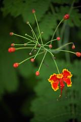 TESTING SONY A7ii (cgambarrotti) Tags: flower beercan butterflyworld minoltaaf70210mmf4 sonya7ii