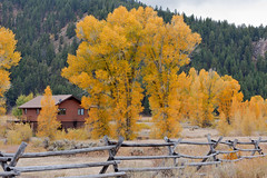 Autumn at Antelope Flats (bhophotos) Tags: travel autumn trees house nature yellow landscape geotagged golden nikon country autumncolors valley aspens wyoming tetons jacksonhole grandtetonnationalpark gtnp antelopeflats d700 jacksonholevalley 70200mmf28gvrii