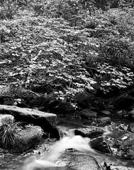 FOMAPAN100-2015-Greenvalley-BW-1 (2) (Xue Rui) Tags: summer blackandwhite bw green 120 film stones large valley format 100 f56 chamonix largeformat schneider fomapan100 fomapan filmisnotdead 045f1 greenstonesvalley