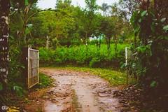IMG_6274 (athingcalledlife) Tags: blackandwhite india green art nature rain photography colours lush coorg virajpet vsco