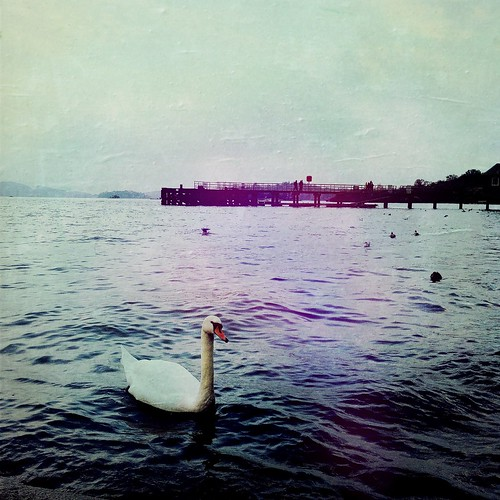 Swan and pier - Luss, Loch Lomond, Scotland