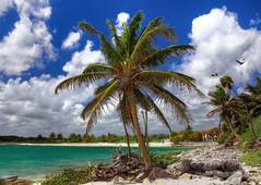Viva La Mexico (biglannie) Tags: travel sea vacation tree beach water beautiful mexico bay sand paradise outdoor postcard relaxing peaceful calm palm palmtree tropical caribbean serene vaction oceanbreeze postcardbeauty rivieramiamexico