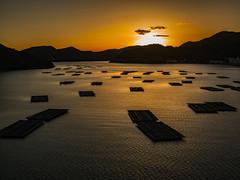 PhoTones Works #7315 (TAKUMA KIMURA) Tags: autumn sunset mountain fall nature leaves japan port landscape town fishing scenery dusk hasselblad   raft oyster      okayama kimura     takuma  p45 hinase phaseone     photones