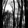 Trees In Water 101 (noahbw) Tags: captaindanielwrightwoods d5000 desplainesriver dof nikon abstract blackwhite blackandwhite blur branches bw depthoffield dreamlike dreamy forest landscape light monochrome natural noahbw reflection river shadow silhouette square trees water winter woods