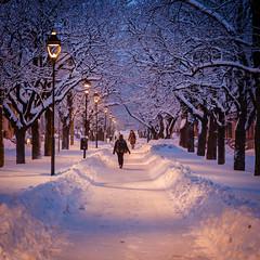 Winter morning (PixPep) Tags: arvika värmland sverige sweden scandinavia winter morning avenue pixpep trees path östraesplanaden