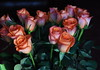 DSC_4240 Orange Rose Bouquet (PeaTJay) Tags: nikond750 reading lowerearley berkshire macro micro closeups gardens indoors nature flora fauna plants flowers bouquetofroses rose roses rosebuds