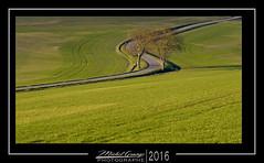 Le S (mg photographe) Tags: vert pré bourgogne burgundy automne virage arbres