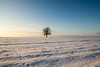 dead tree (Johannes Roser) Tags: tree baum schnee snow sunrise nature lonelytree field ries