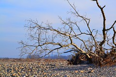 Nature morte (cécilearmand) Tags: naturemorte nature tree durance france winter countryside photography nikond3100