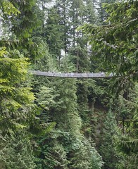 Capilano Suspension Bridge, Vancouver, Canada (dan tsai) Tags: canada forest olympusomdem5 em5 vancouver bridge olympus suspensionbridge trees capilanosuspensionbridge omd olympusmzuikodigitaled1240mmf28pro