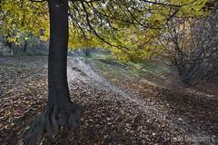 parco urbano della Maddalena, Maddalena urban park (paolo.gislimberti) Tags: wood bosco paesaggi landscapes alberi trees foglie leaves sottobosco undergrowth controluce backlighting sentieri path trekking autumn autunno autumnalcolors coloriautunnali