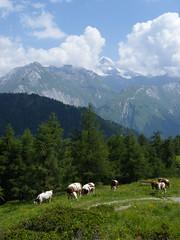 Idilli kép: Grossglockner és tehenek (ossian71) Tags: ausztria austria österreich alpok alpen alps grossglockner tájkép landscape természet nature hegy mountain