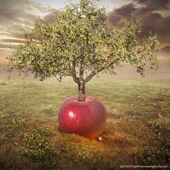 apple tree (evenliu photography) Tags: manipulation photomanipulation photoshop photoedit art photoart digital digitalart evenliu even liu surreal surrealism apple tree imagine heaven dream dreamscape