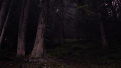 Alpine Forest (Netsrak (on/off)) Tags: riezlern vorarlberg österreich at mist fog nebel wald forst forest woods alps alpen tree trees baum bäume kleinwalsertal nature natur darkness dunkelheit light licht