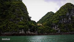 Intrus Sur La Roche (CH-Romain) Tags: vietnam viet vietnamese vietnamien asia asiatique asie arbre nature maison house roche rocher pierre halong bay baie ocean mer sea eau