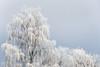 Cold Morning (w.lichtmagie) Tags: landshut vilsheim winter frost kalt canon efs 1585 eos 80d weis white cold ngc platinumheartaward