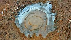 Ice Formation over Puddle (Bob's Digital Eye) Tags: bobsdigitaleye flicker flickr ice laquintaessenza lgl62vl outdoor pattern phoneoutside puddle texture winter winterinmn 2017