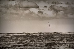 Winter (marcus.greco) Tags: vintage winter old seppia dark darkness sea sky bird fly free freedom