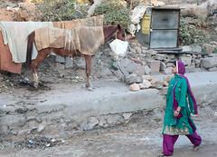 Feedbag (peterkelly) Tags: digital canon 6d india asia jaipur woman purple green street horse rocks rock feedingbag feedbag morral nosebag gadventures essentialindia